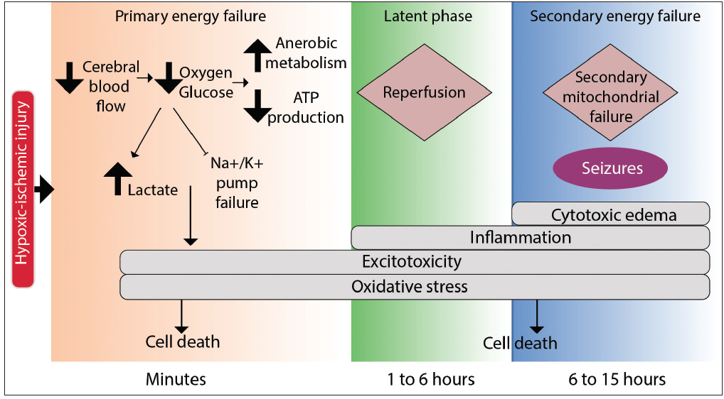 <p>Figure. The 3 phases of hypoxic-ischemic encephalopathy (HIE).</p>