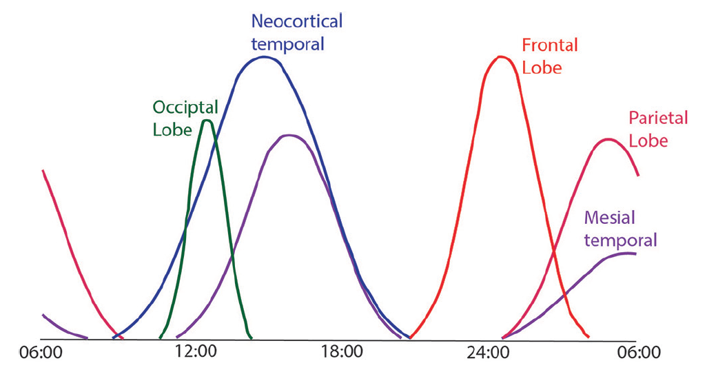 Figure. Seizures with different origins have different circadian patterns, which can be distinct enough to aid diagnosis. These curves show circadian patterns, not actual frequency, and those shown for occipital and parietal lobe seizures are less reliable because of the lower incidence of these seizure types.
