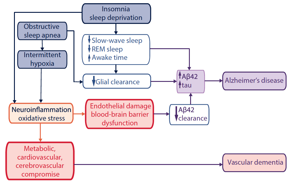 Figure 1. Association between obstructive sleep apnea and insomnia with Alzheimer's dIsease and vascular dementia. Abbreviation: Aβ42, amyloid-β42.