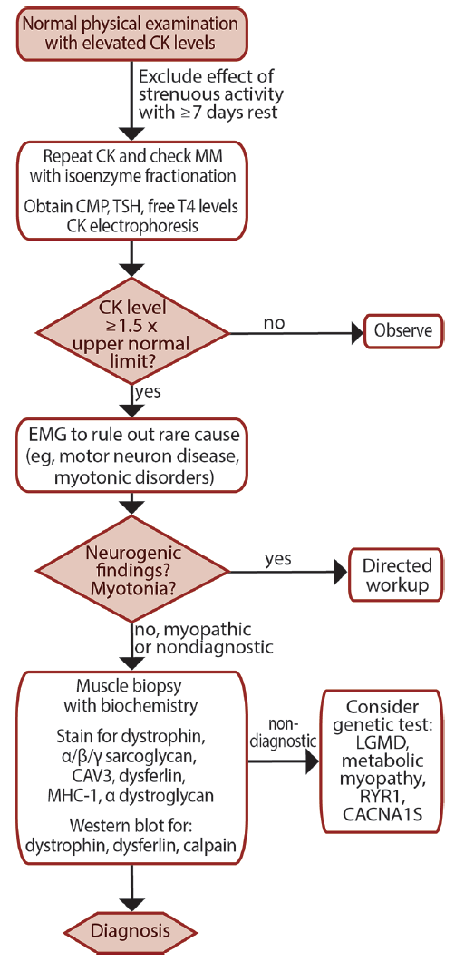 Figure: Diagnostic Algorithm for Asymptomatic HyperCKemia. Abbreviations: CK, creatine kinases; CMP, comprehensive metabolic panel; LGMD, limb girdle muscle dystrophies; TSH, thyroid-stimulating hormone.