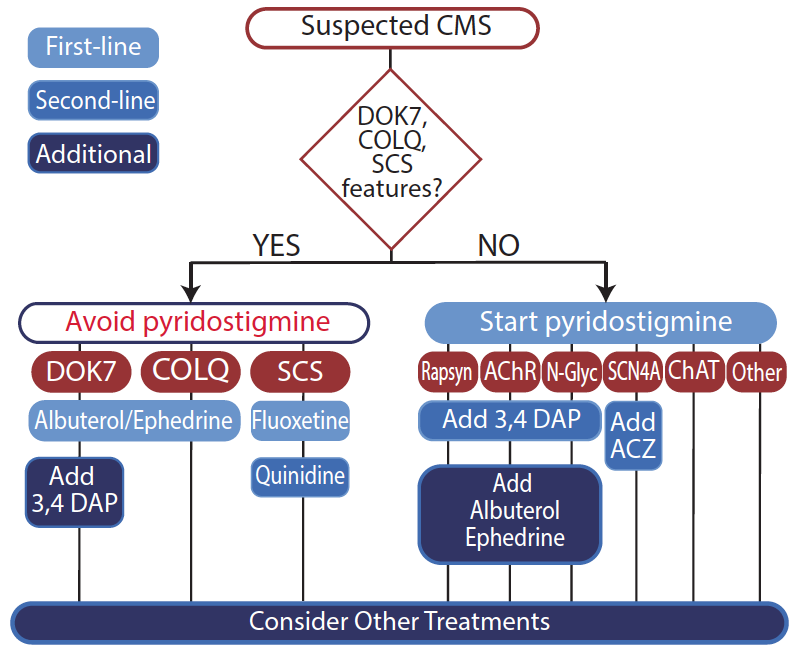 Figure. Treatment algorithm for the most common congenital myasthenic syndromes. Treatment shown for DOK7 can be used for all subtypes associated with the AChR-clustering complex, and in these subtypes, 3,4-DAP should be used only after first- and second-line treatments and with great caution. Other options reported to have benefit are prednisone (CHRNE CMS), neostigmine methyl sulfate (CHAT CMS), amiloride, spironolactone, and theophylline (DOK7 CMS), although the benefit/risk of these treatments is not clear. Abbreviations: 3,4 DAP, 3,4-diaminopyridine; AChR, acetylcholine receptor; ACZ, acetazolamide; ChAT, choline acetyltransferase; CMS, congenital myasthenic syndromes; COLQ, collagen-like tail subunit of asymmetric acetylcholinesterase; DOK7, docking protein 7; N-Glyc, N-glycosylation pathway; SCN4A, sodium channel type 4 subunit alpha; SCS, slow-channel syndrome.