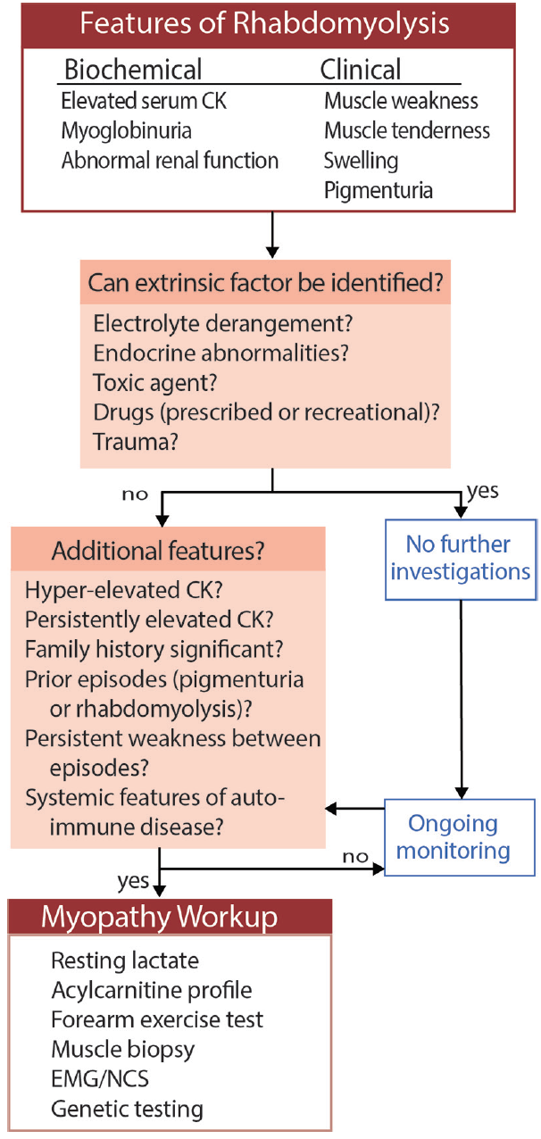 <p>Figure. Diagnostic algorithm for suspected rhabdomyolysis. Abbreviations: CK, creatinine kinase; EMG, electromyography; NCS, nerve conduction studies.</p>