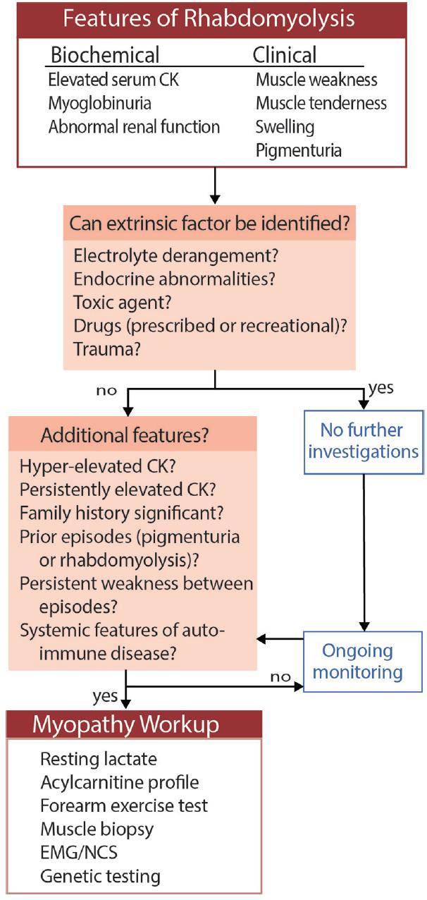 <p>Figure. Diagnostic algorithm for suspected rhabdomyolysis. Abbreviations: CK, creatinine kinase; EMG, electromyography; NCS, nerve conduction studies.</p>