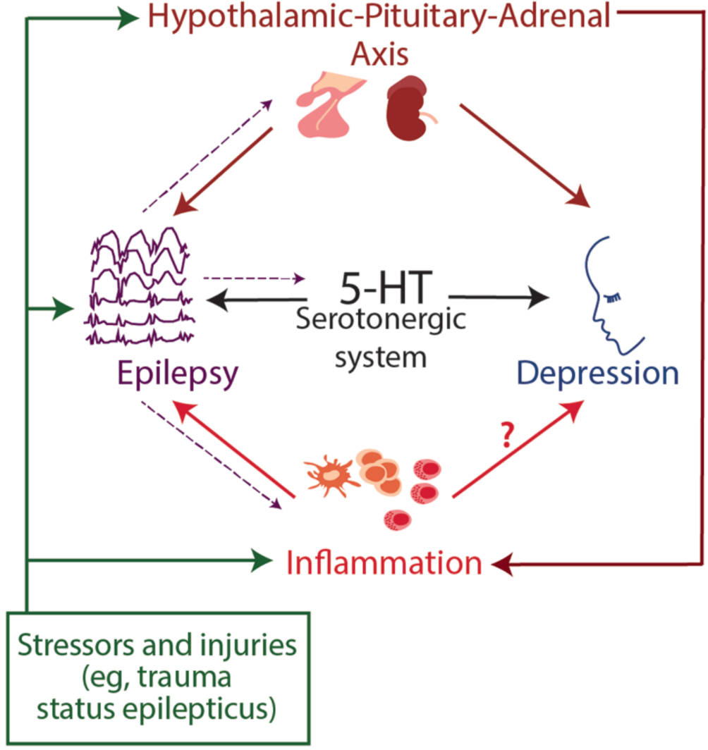 Figure. Potential shared mechanisms of epilepsy and depression.